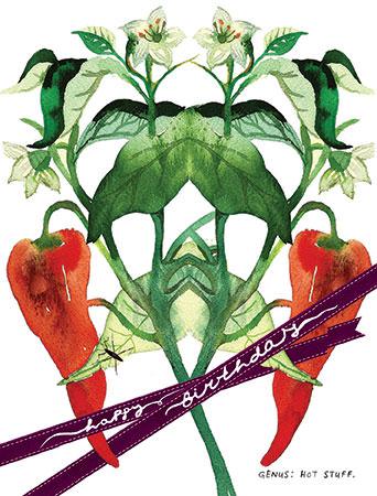 botanicus hot stuff pepper plant watercolor Masha D'yans