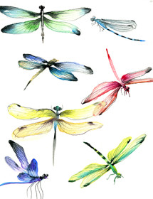G108-dragonflies-watercolor-masha-dyans