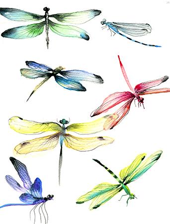 G108-dragonflies-watercolor-masha-dyans