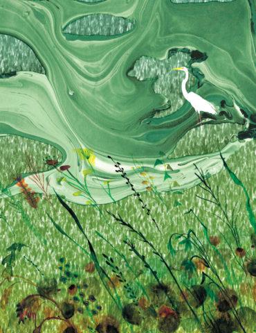 greenscape crane watercolor masha dyans
