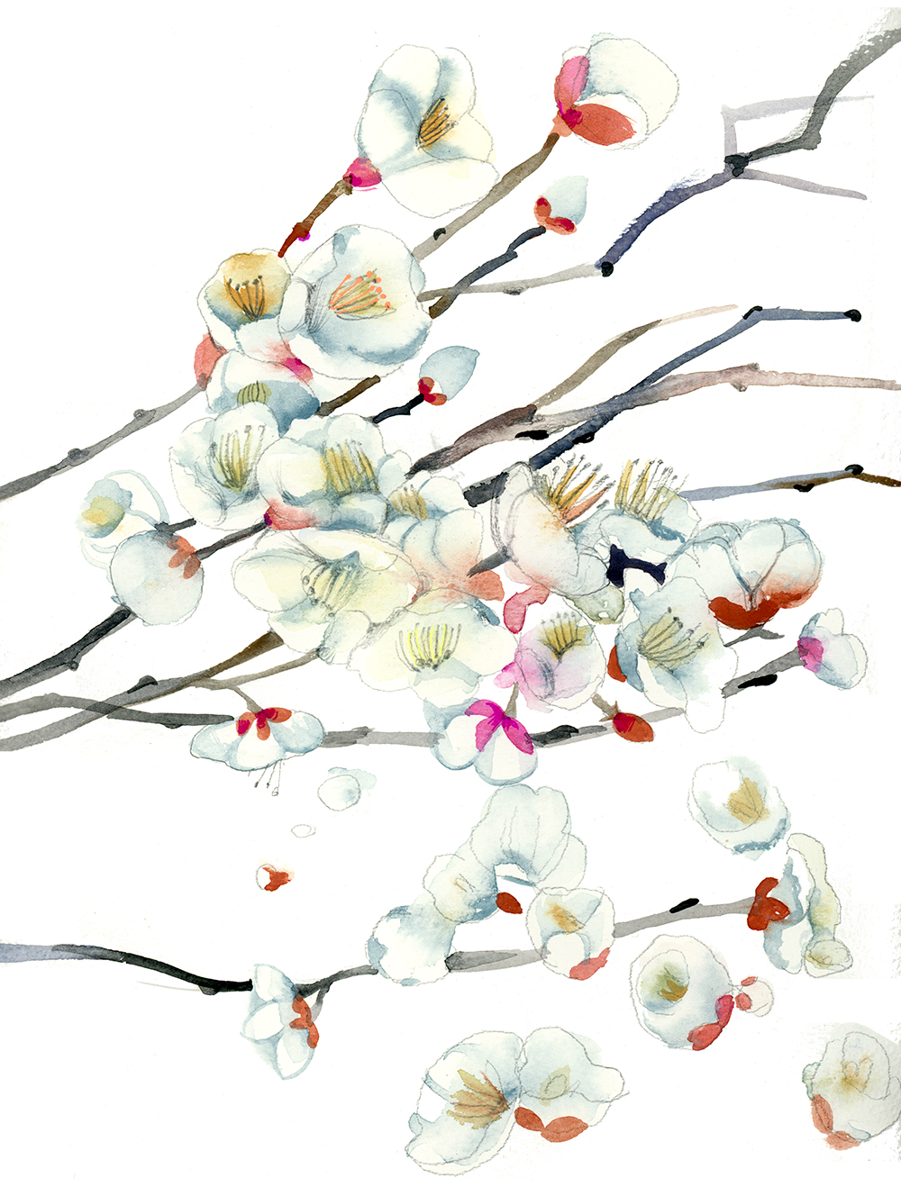 march apple blossoms watercolor by masha dyans