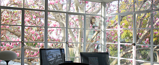 magnolia-window-masha-dyans